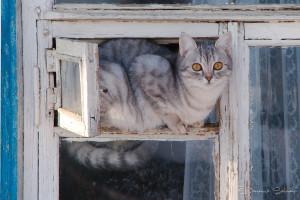 ©Russian Cat