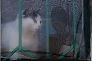 ©Just A Cat